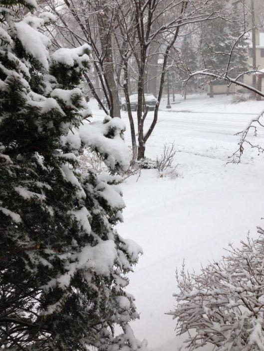 98d32-snowinstpaul
