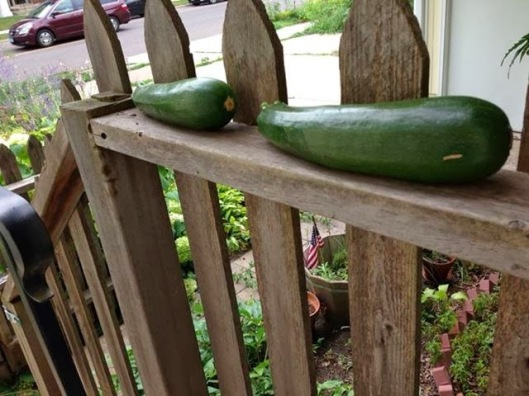 7f5bf-food-zucchinionporch