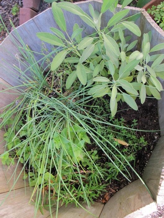 Food-Herbs
